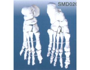 Model of The Bone of The Foot (YJ020)