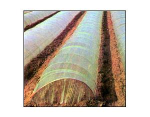 Polyethylene Blown Film for Agriculture