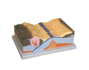 Plate Tectonic Model (Z001)