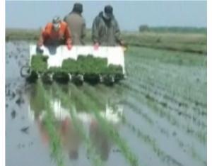 Rice Transplanter (2ZJ-6)