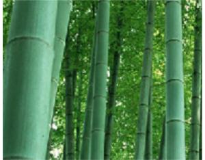Bamboo keyboard, bamboo mouse