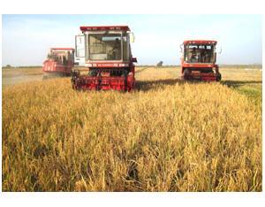 Harvesting on Farm